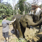 Learning how to be a mahout