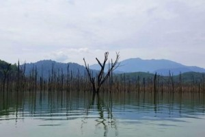 Lake exploration near our homestay in Thailand in Yala Thailand