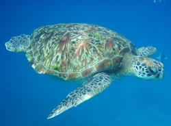 Koh Surin National Park Snorkeling