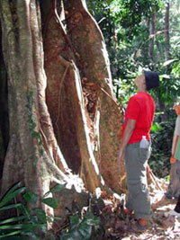 Ecotour Activities - Eco Jungle Trek