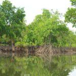 Andaman Coast Mangroves