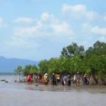Koh Phrathong Mangrove Planting
